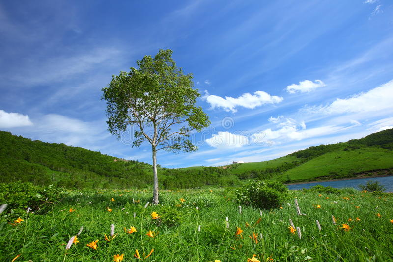 Dzień drzewo leluja i fotografia royalty free