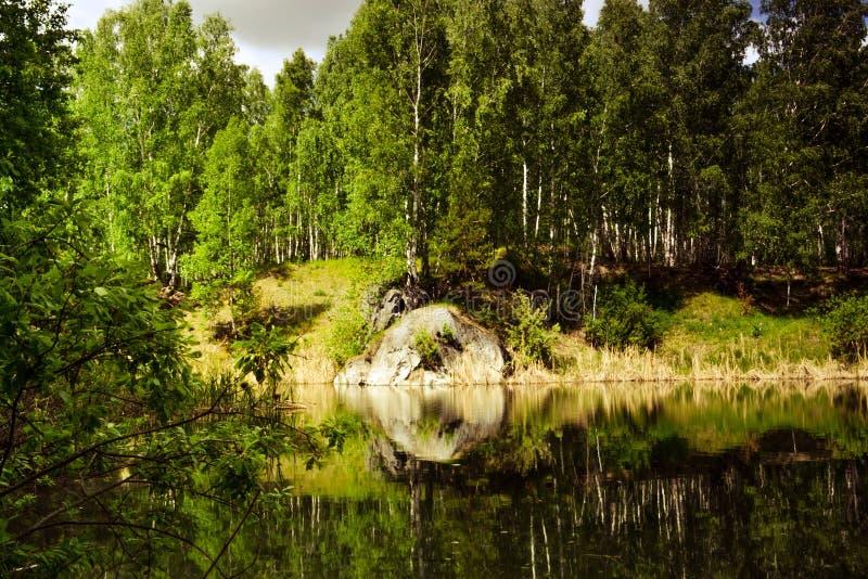 dzień lasu krajobraz pogodny obraz stock