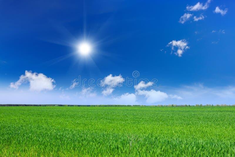 Download Dzień Lata Gorąca Pola Pszenicy Obraz Stock - Obraz złożonej z sezon, zboże: 53784837