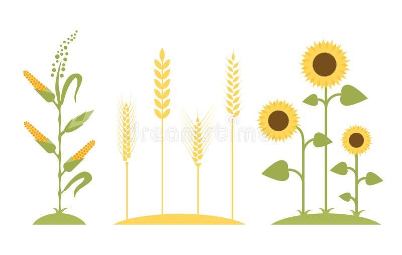 dzień lata gorąca pola pszenicy Słonecznikowa ikony kreskówka ilustracja wektor