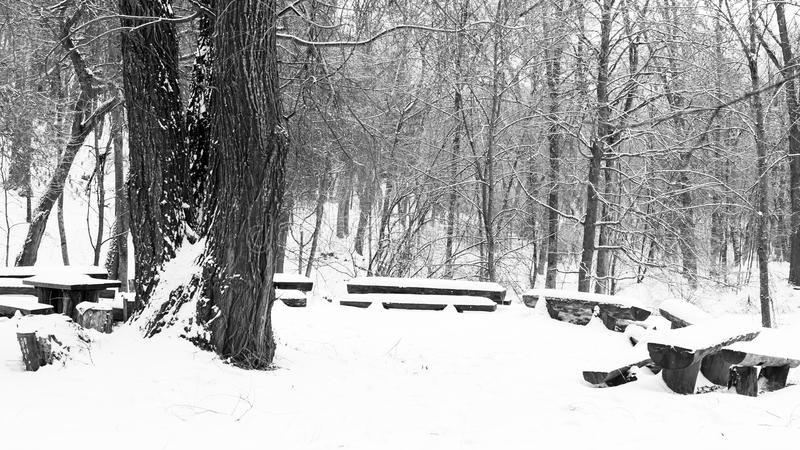 dzień mrozowa Styczeń natury parka śnieżna drzew zima obraz royalty free