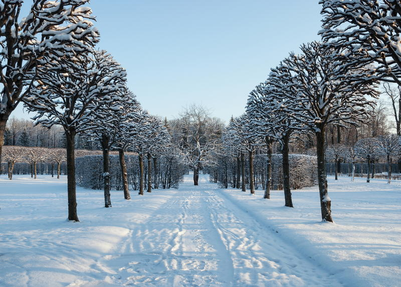 dzień mrozowa Styczeń natury parka śnieżna drzew zima obrazy stock