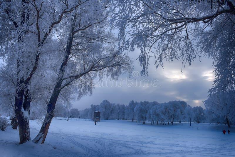 dzień mrozowa Styczeń natury parka śnieżna drzew zima zdjęcie royalty free