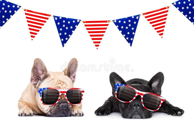 Dzień Niepodległości 4th Lipa pies zdjęcie royalty free