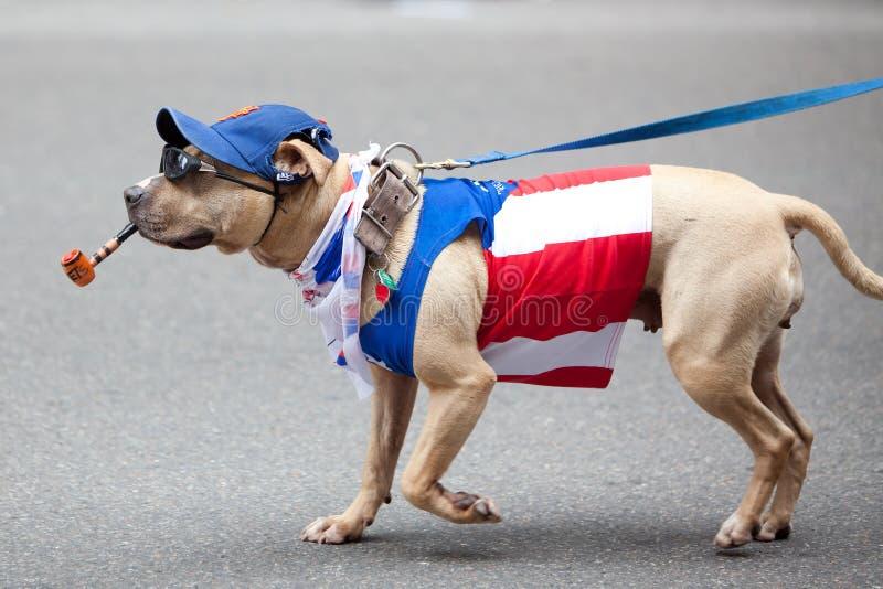 dzień parady puerto rican zdjęcie stock