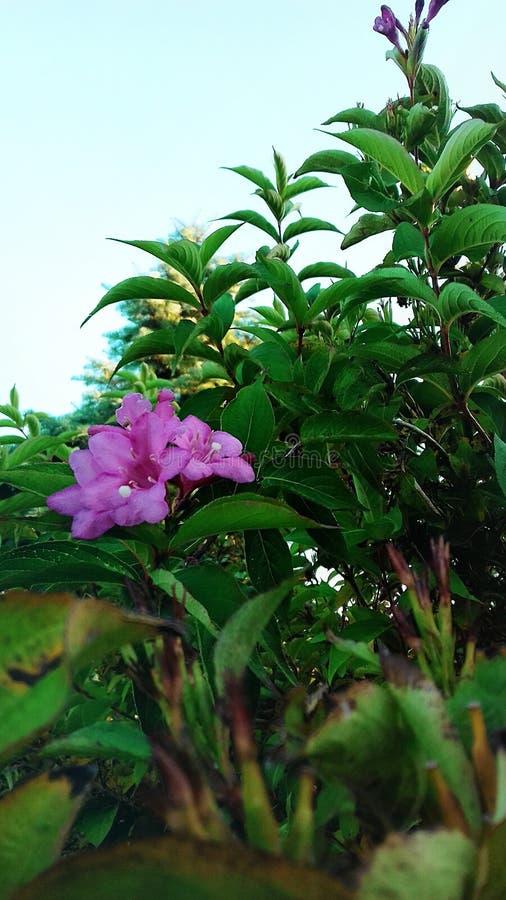 dzień sunny lato Kwiat kwitnący w Sierpniowym pięknie natura fotografia stock