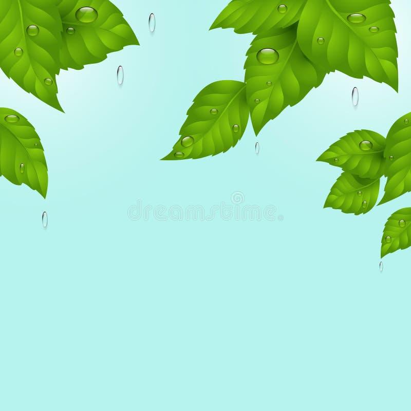 dzie? deszcz w kontek?cie niebieskie chmury odpowiadaj? trawy zielone niebo bia?e wispy natury Zieleń liście przeciw raindrops i  royalty ilustracja