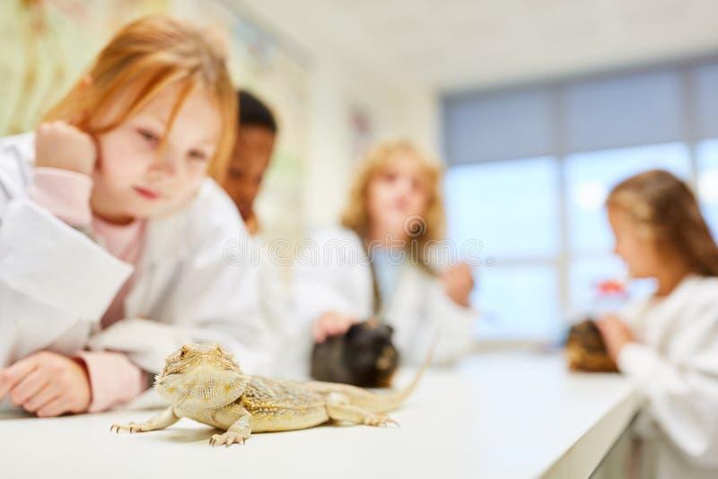 Dzieci badają iguany i innych zwierząt obrazy royalty free