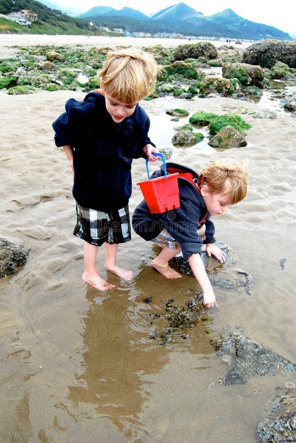 Dzieci Badają przypływów basenów z Czerwonym wiadrem zdjęcie royalty free