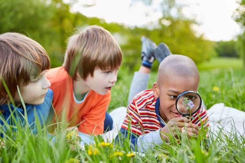 Dzieci patrzeją kwiatu przez powiększać - szkło zdjęcie stock