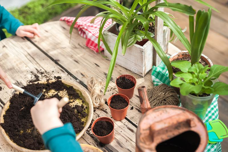 Dzieci pomagają przeflancowywać rośliny w ziemię w garnkach, Uprawiać ogródek w wintergarden zdjęcie royalty free
