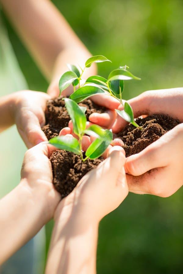 Dzieci trzyma młodej rośliny w rękach zdjęcia stock