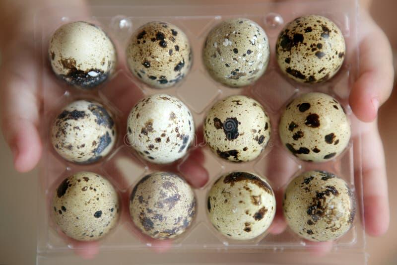 dzieci tuzin jajek ręk przepiórek zdjęcie stock