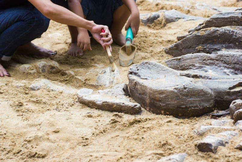Dzieci uczy się dinosaur skamielin symulację obrazy royalty free