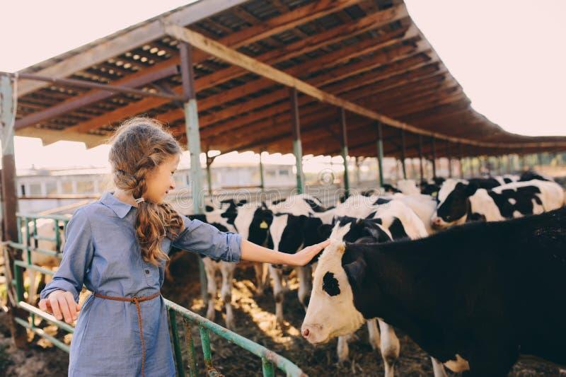 Dzieciak dziewczyny żywieniowa łydka na krowy gospodarstwie rolnym Wieś, wiejski utrzymanie zdjęcia stock