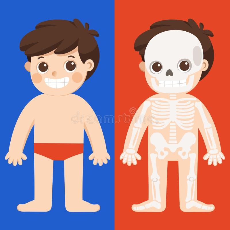Dzieciaka ciała anatomii wektor Ludzka zredukowana część ilustracji