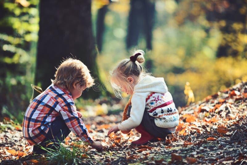 Dzieciaki aktywność i aktywnych spoczynkowi dzieci podnoszą acorns od dębowych drzew Brata i siostry camping w jesień lesie Troch obraz stock
