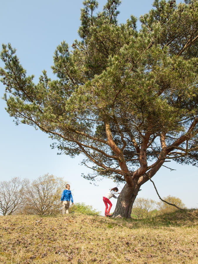 Dzieciaki bawić się obok drzewa zdjęcia stock