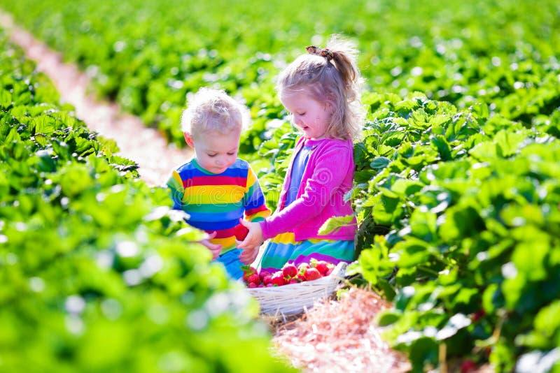 Dzieciaki podnosi świeżej truskawki na gospodarstwie rolnym zdjęcie stock