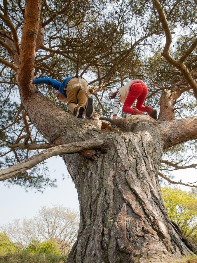 Dzieciaki wspina się w drzewie obrazy stock