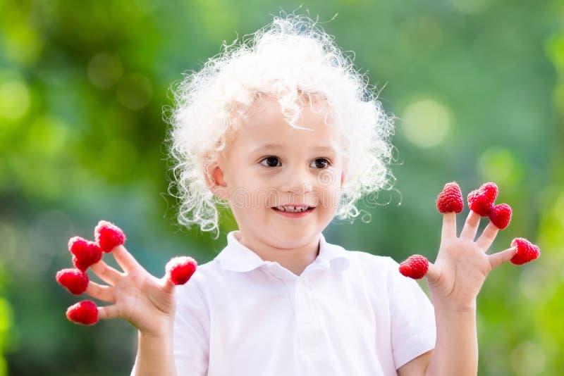 Dziecka łasowania i zrywania malinka w lecie zdjęcia royalty free