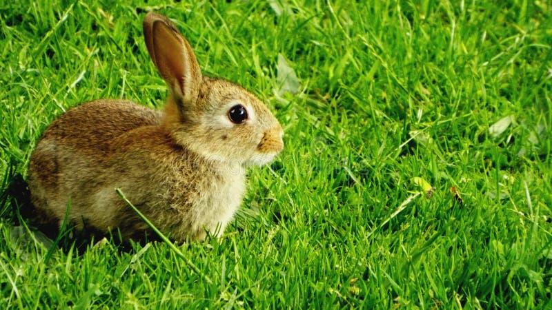 Dziecka babbit obrazy royalty free