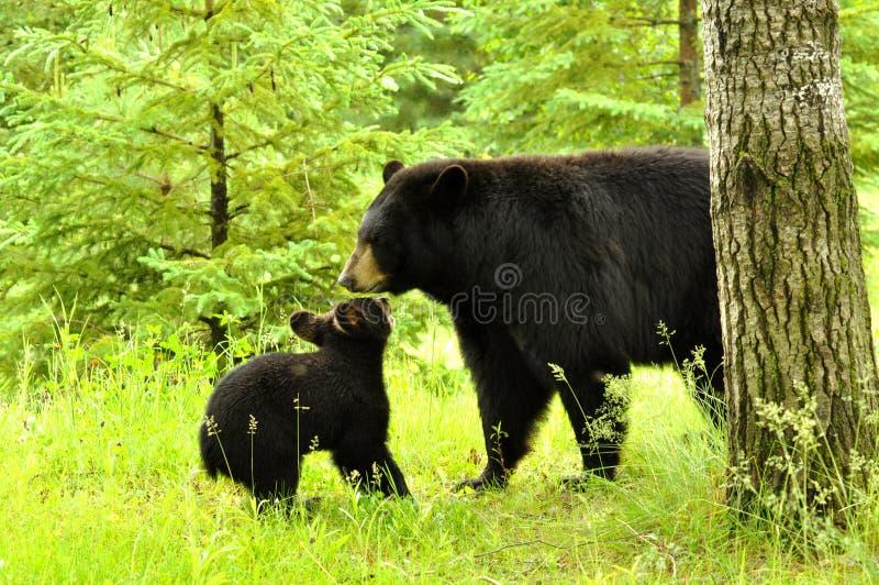 dziecka bawić się niedźwiadkowy czarny zdjęcia stock