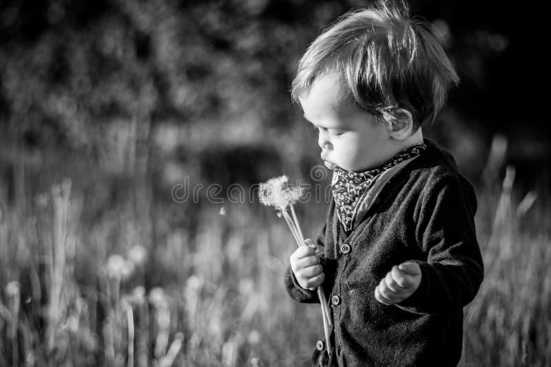 Dziecka dandelion podmuchowi ziarna w parku obraz royalty free