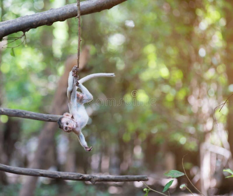 Dziecka małpi obwieszenie na drzewie fotografia royalty free