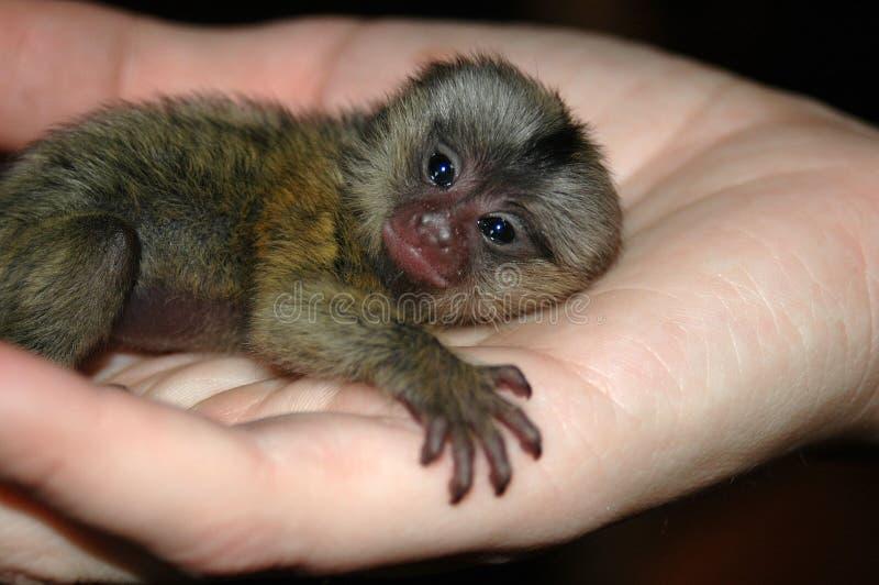dziecka ręki małpa