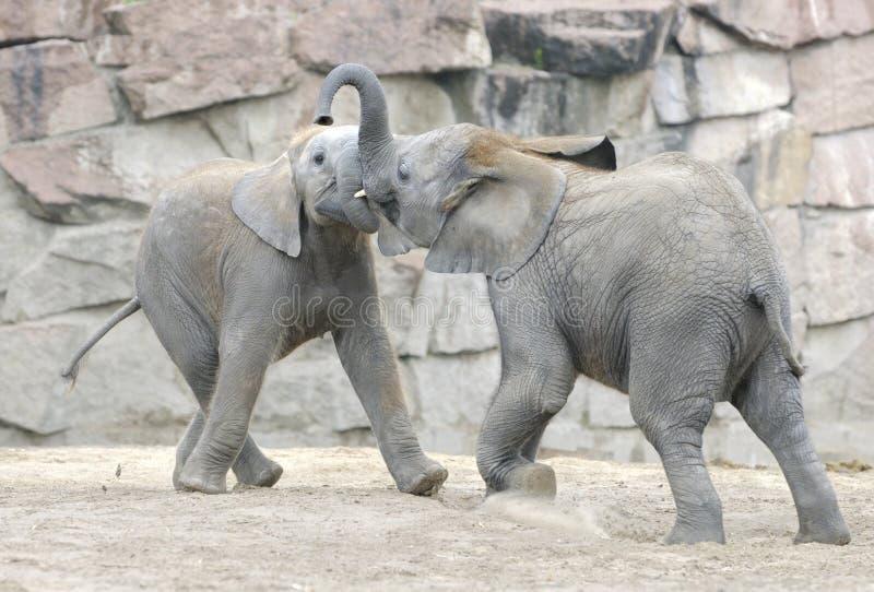 dziecka słoni bawić się obraz royalty free