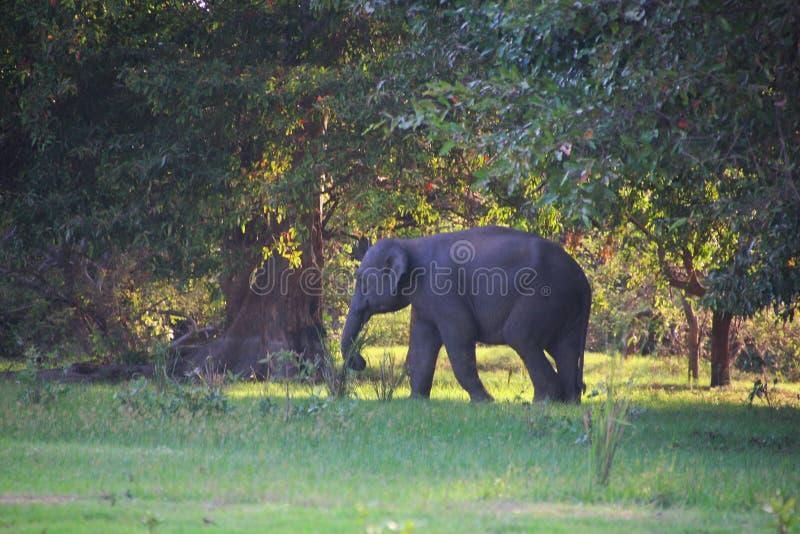2009 dziecka słonia fotografia brać obraz stock