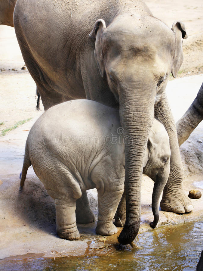 dziecka słonia matka zdjęcie stock