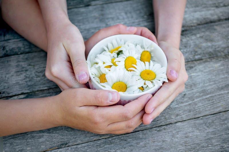 Dziecka ` s wręcza trzymać filiżankę z chamomile kwiatami Pojęcie symbol lato, dzieciństwo zdjęcie stock