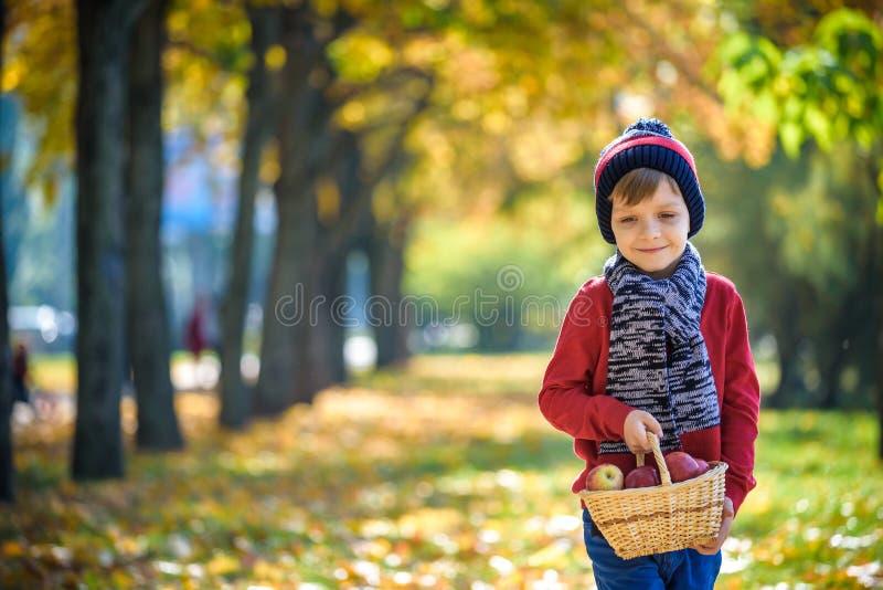 Dziecka zrywania jab?ka w jesieni Ma?a ch?opiec bawi? si? w jab?o? sadzie Dzieciaka wyboru owoc w koszu Berbecia ?asowania owoc zdjęcia royalty free