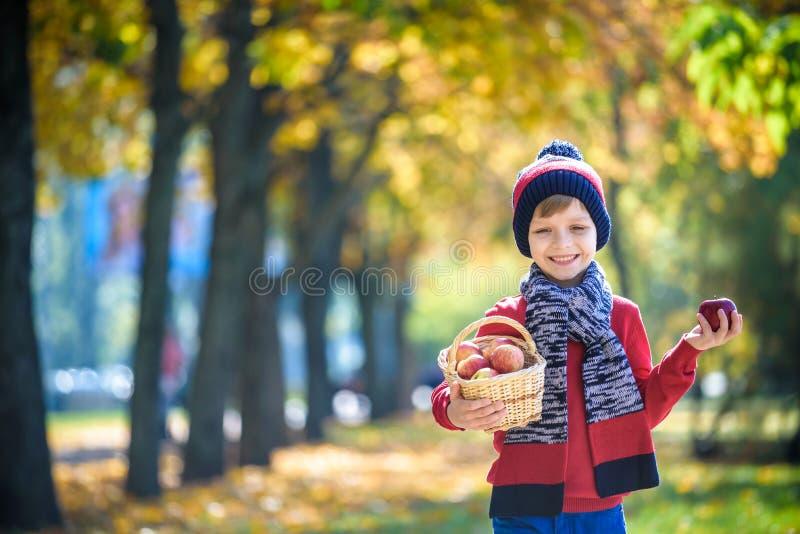 Dziecka zrywania jab?ka w jesieni Ma?a ch?opiec bawi? si? w jab?o? sadzie Dzieciaka wyboru owoc w koszu Berbecia ?asowania owoc obrazy stock