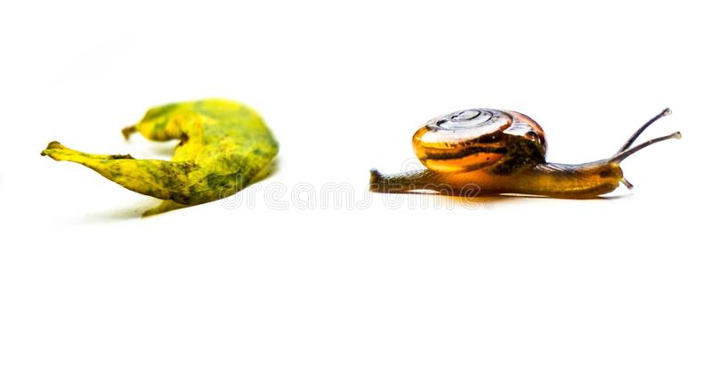 Dziecko ślimaczek w ogródzie zdjęcie stock