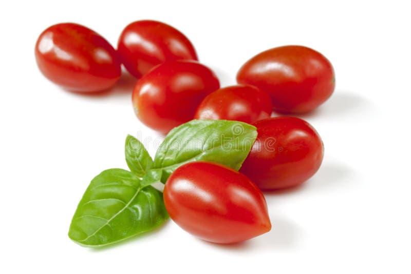 Dziecko Śliwkowi pomidory z basilem Odizolowywającym fotografia stock