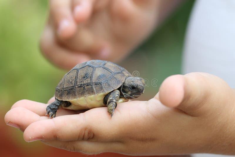 Dziecko żółw zdjęcie royalty free