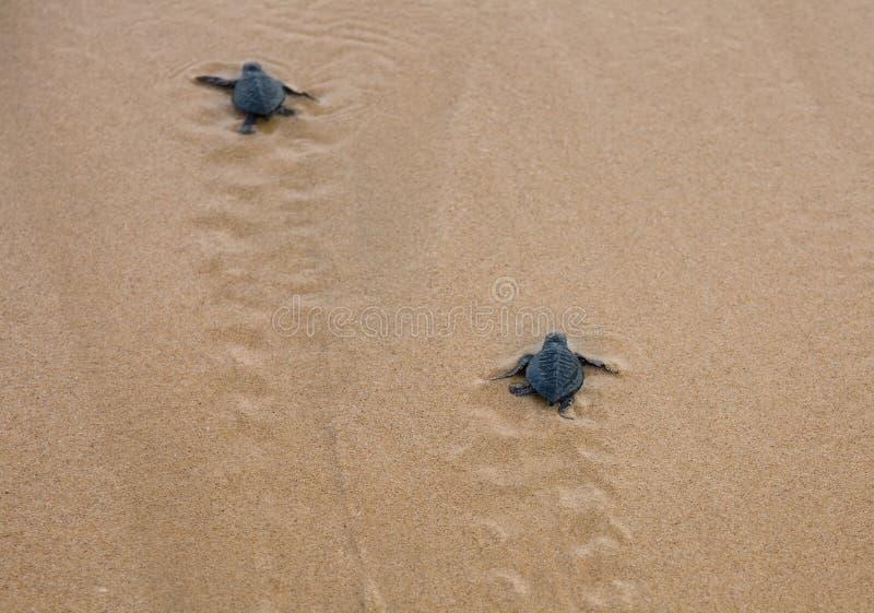 Dziecko żółwie fotografia royalty free