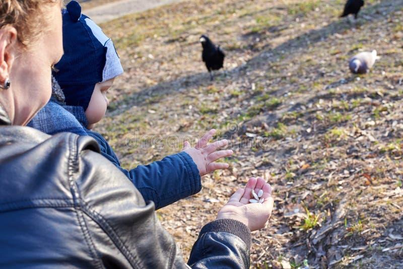 Dziecko bierze dyniowych ziarna od jej matki ręki karmić ptaki w parku w wczesnej wiośnie obrazy royalty free