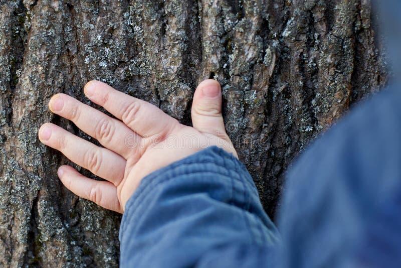 Dziecko dotyka barkentynę drzewo z jego ręką dziecko rozwija świat i zna obraz stock