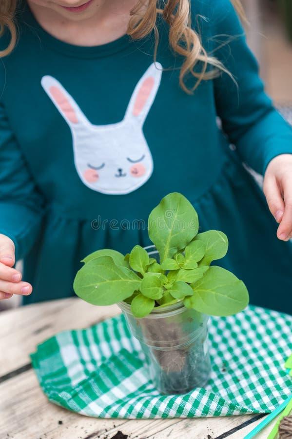 Dziecko dziewczyna w sukni zielonych przeszczepach puszkujących kwitnie w wintergarden Dziewczyna w ogrodnictwo pomocy przeszczep zdjęcia stock