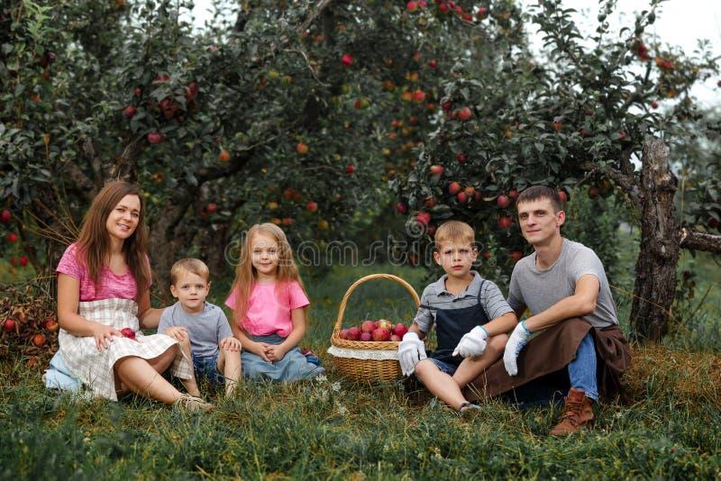 Dziecko dziewczyny chłopiec brata ojca matki rodziny siostrzanego jabłka fartucha ogrodowe duże koszykowe rękawiczki wpólnie prac zdjęcia stock