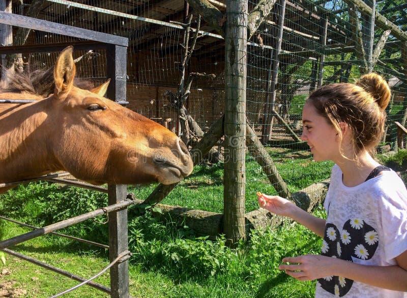 Dziecko i koń fotografia stock