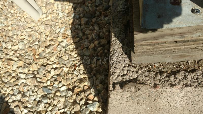 Dziecko jaszczurki camofloge cement obraz royalty free