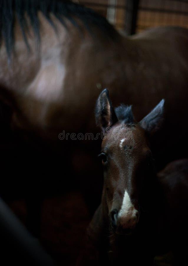 dziecko koń zdjęcia stock