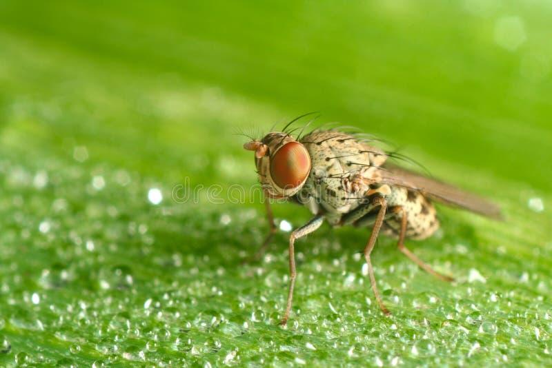 dziecko komarnica zdjęcia stock