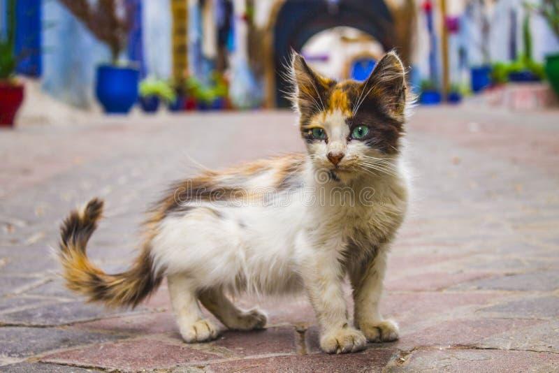 Dziecko kot zdjęcie stock