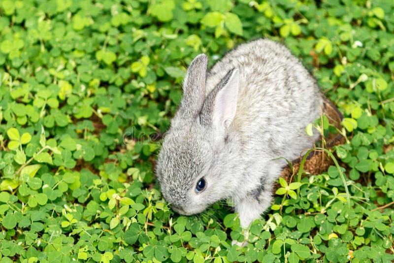 Dziecko królik iść wolność obraz stock